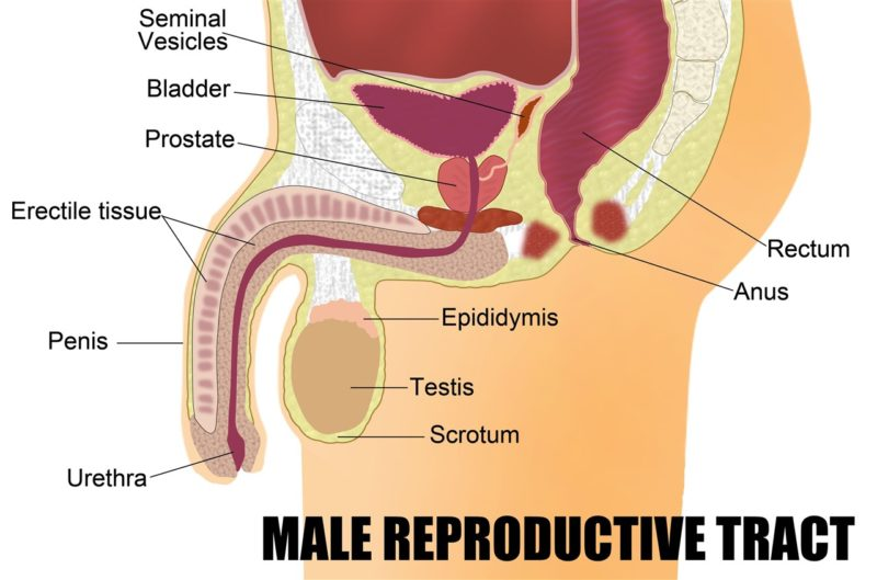 Common Causes of Erectile Dysfunction